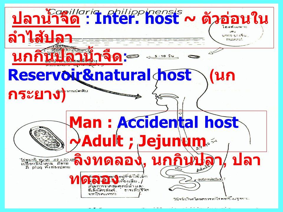 ปลาน้ำจืด : Inter. host ~ ตัวอ่อนในลำไส้ปลา