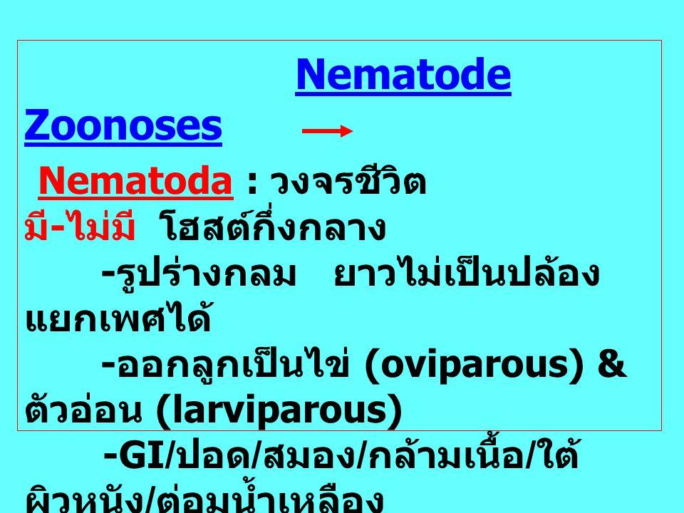 Nematoda : วงจรชีวิต มี-ไม่มี โฮสต์กึ่งกลาง