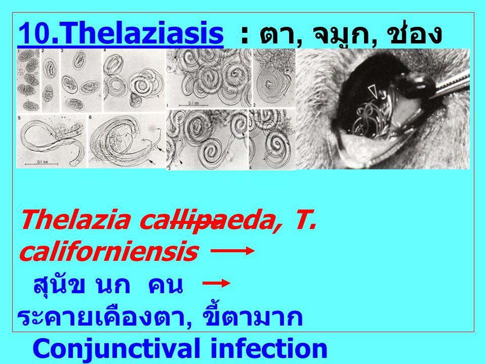 10.Thelaziasis : ตา, จมูก, ช่องปาก