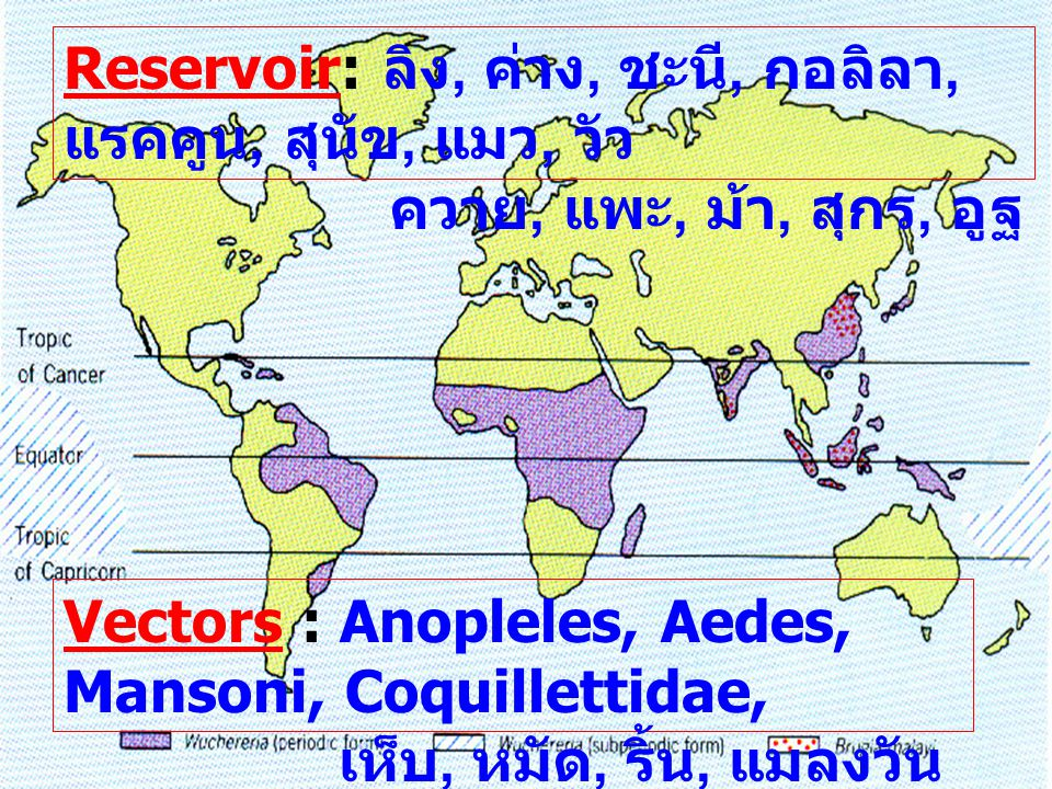 Reservoir: ลิง, ค่าง, ชะนี, กอลิลา, แรคคูน, สุนัข, แมว, วัว