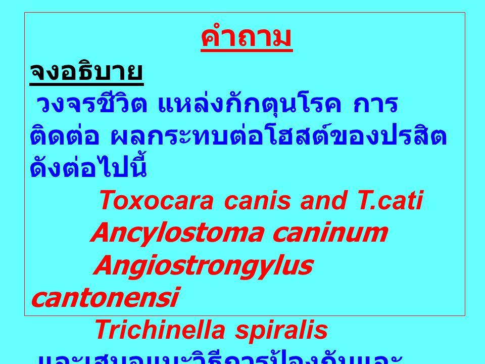 คำถาม จงอธิบาย. วงจรชีวิต แหล่งกักตุนโรค การติดต่อ ผลกระทบต่อโฮสต์ของปรสิตดังต่อไปนี้ Toxocara canis and T.cati.