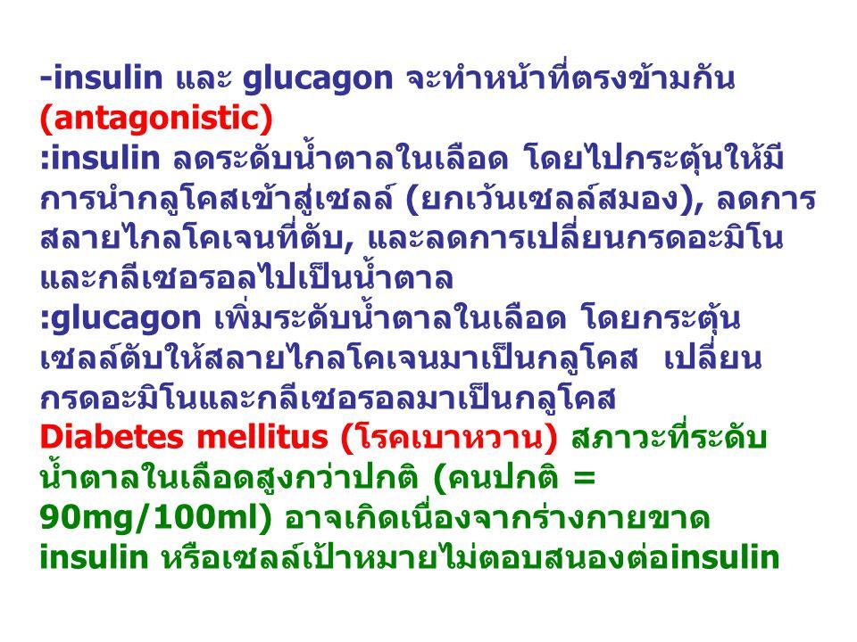 -insulin และ glucagon จะทำหน้าที่ตรงข้ามกัน(antagonistic)