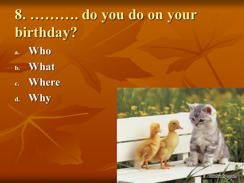 8. ………. do you do on your birthday
