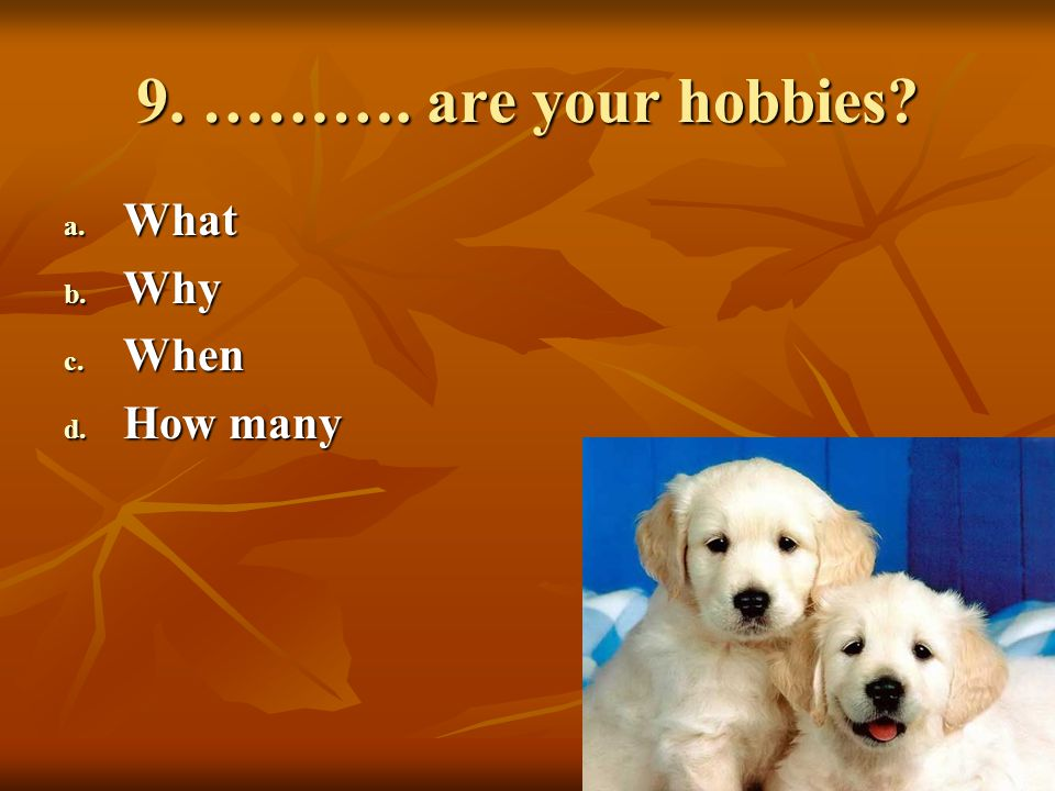 9. ………. are your hobbies What Why When How many