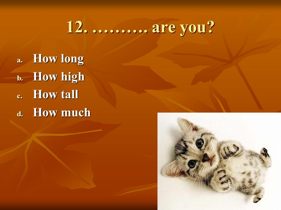 12. ………. are you How long How high How tall How much