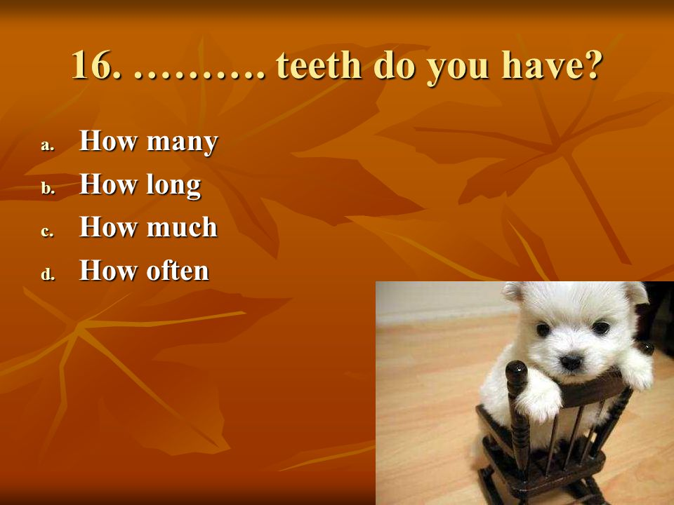 16. ………. teeth do you have How many How long How much How often