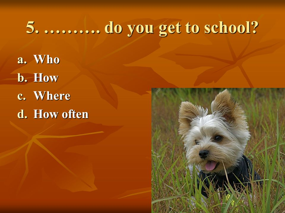 5. ………. do you get to school Who How Where How often