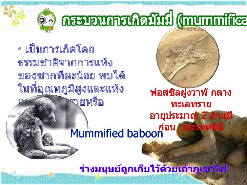 กระบวนการเกิดมัมมี่ (mummification)