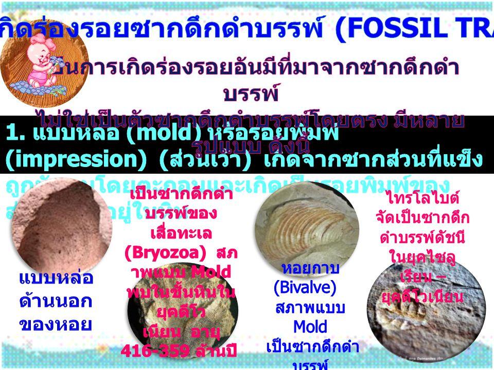 การเกิดร่องรอยซากดึกดำบรรพ์ (fossil traces)