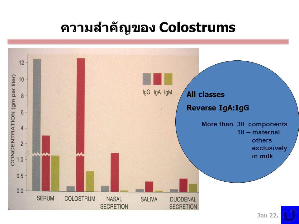 ความสำคัญของ Colostrums