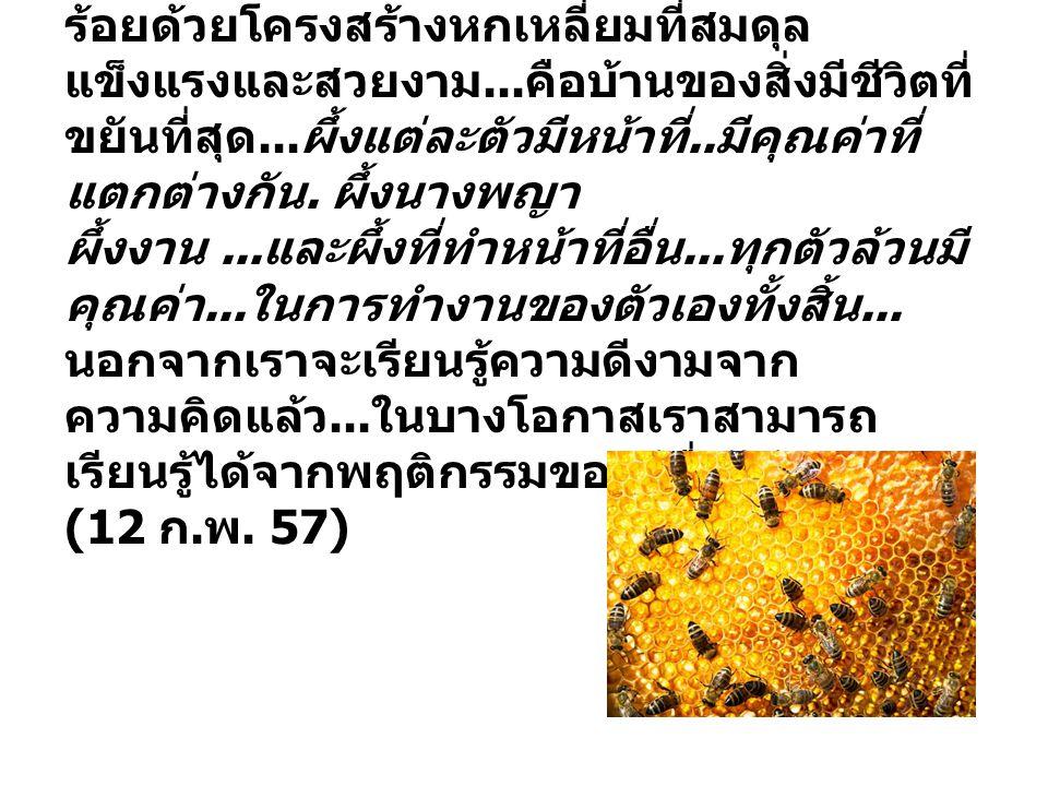 รังผึ้ง. ความมหัศจรรย์แห่งธรรมชาติ