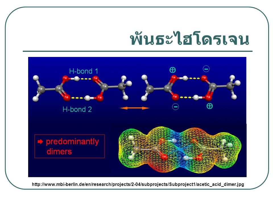 พันธะไฮโดรเจน http://www.mbi-berlin.de/en/research/projects/2-04/subprojects/Subproject1/acetic_acid_dimer.jpg.