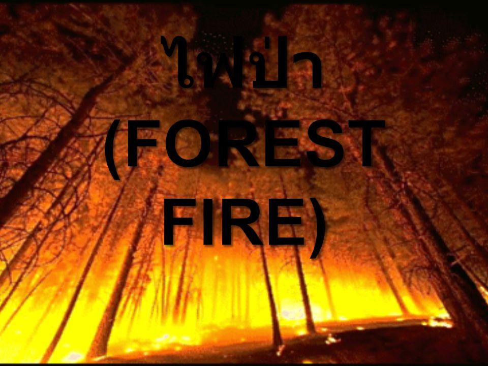ไฟป่า(Forest Fire)