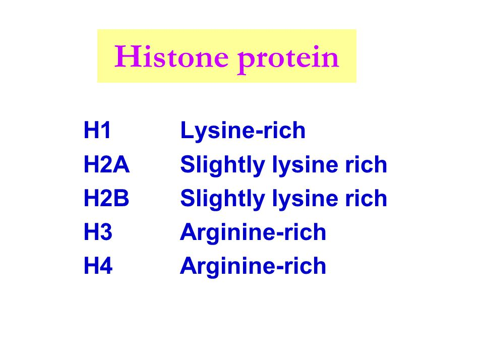 Histone protein H1 Lysine-rich H2A Slightly lysine rich
