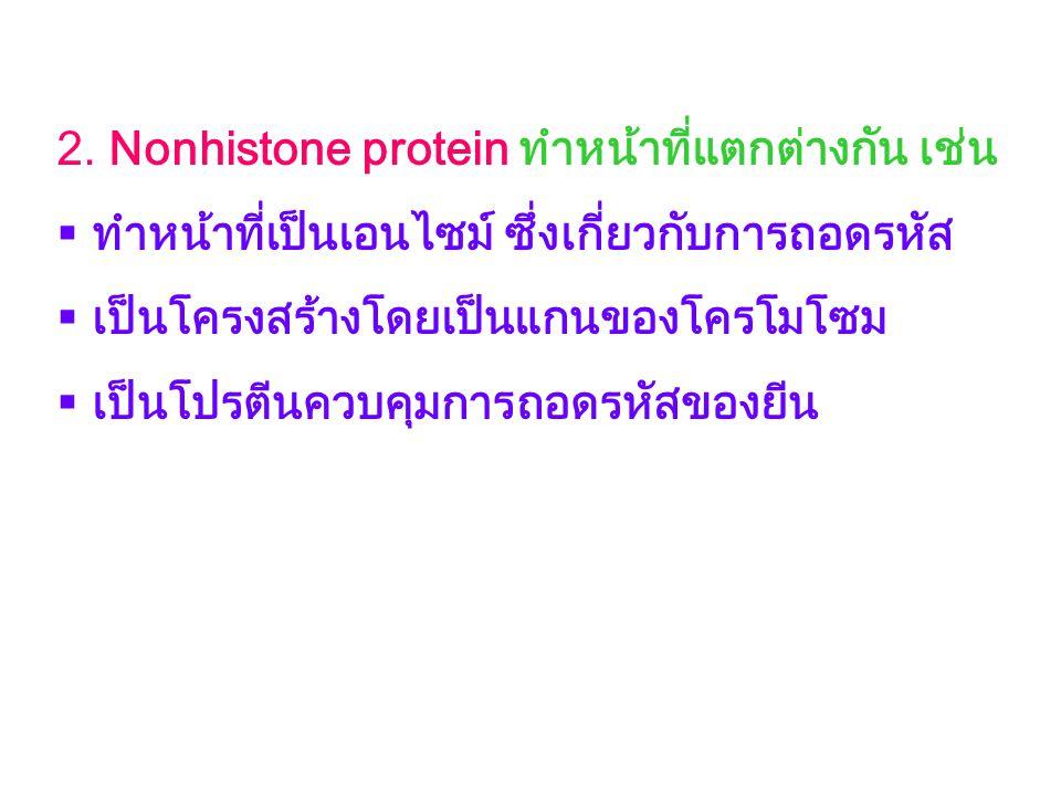 2. Nonhistone protein ทำหน้าที่แตกต่างกัน เช่น