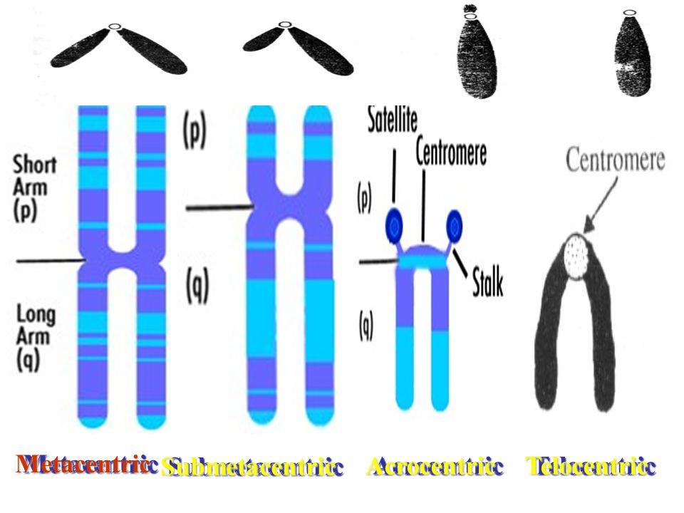 Metacentric Submetacentric Acrocentric Telocentric