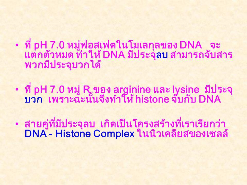 ที่ pH 7.0 หมู่ฟอสเฟตในโมเลกุลของ DNA จะแตกตัวหมด ทำให้ DNA มีประจุลบ สามารถจับสารพวกมีประจุบวกได้