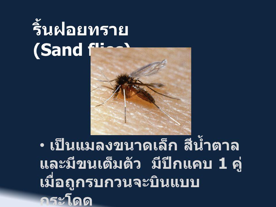 ริ้นฝอยทราย (Sand flies)