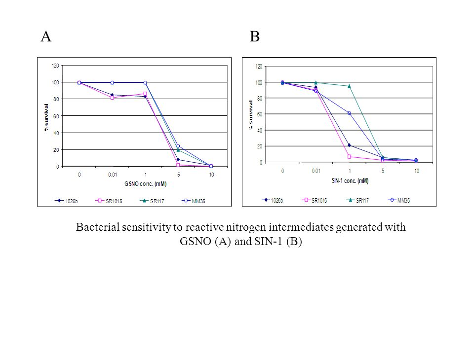A B Bacterial sensitivity to reactive nitrogen intermediates generated with GSNO (A) and SIN-1 (B)