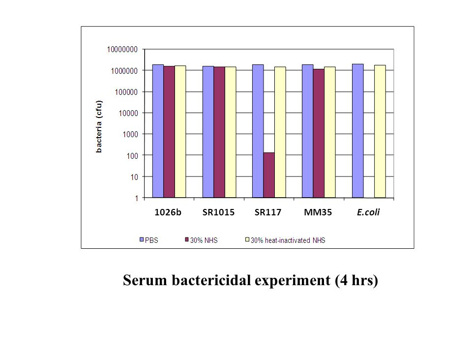 Serum bactericidal experiment (4 hrs)