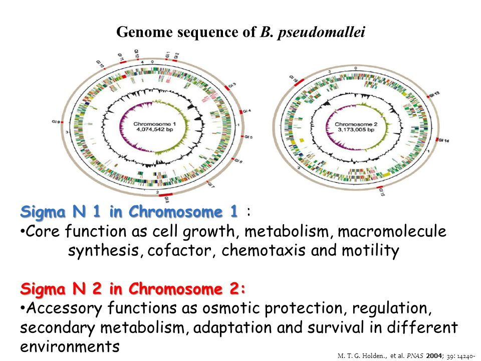 Genome sequence of B. pseudomallei