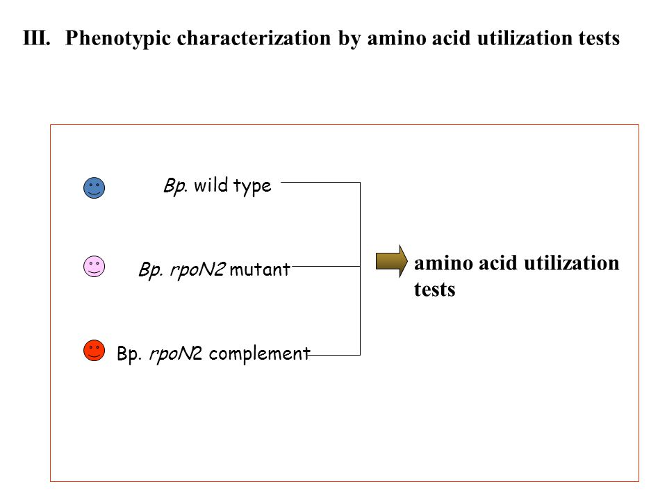 III. Phenotypic characterization by amino acid utilization tests