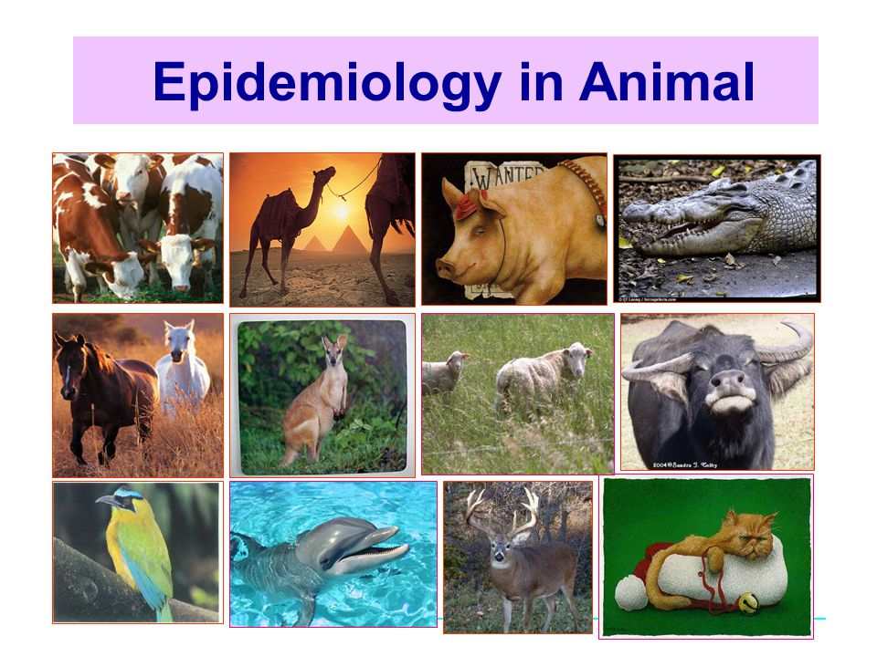 Epidemiology in Animal