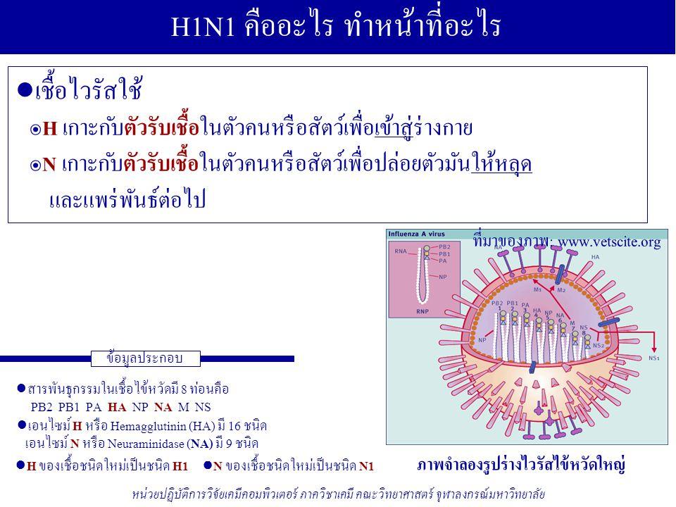 H1N1 คืออะไร ทำหน้าที่อะไร