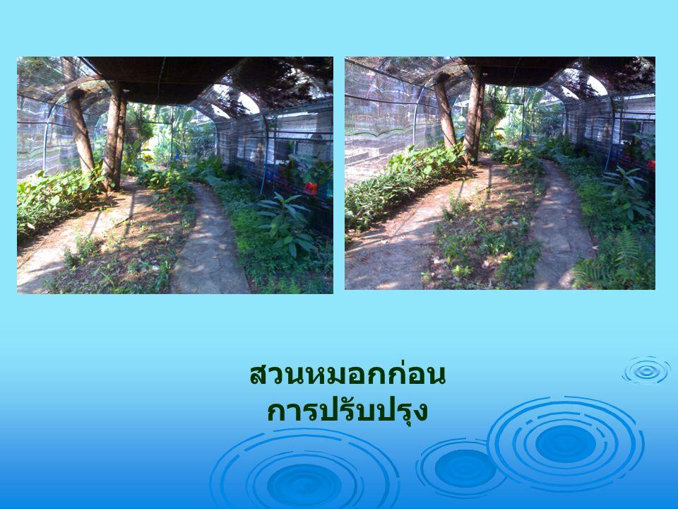 สวนหมอกก่อนการปรับปรุง