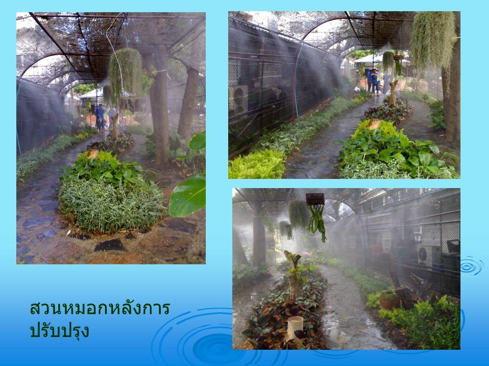 สวนหมอกหลังการปรับปรุง