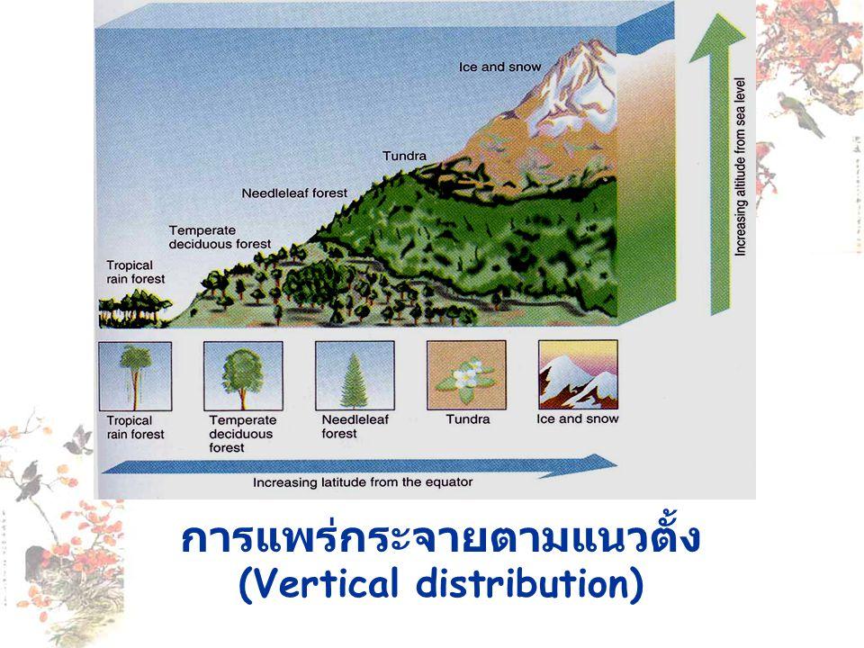 การแพร่กระจายตามแนวตั้ง (Vertical distribution)