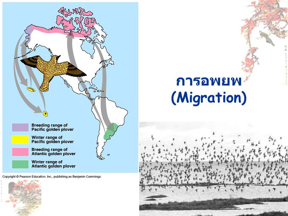 การอพยพ (Migration)