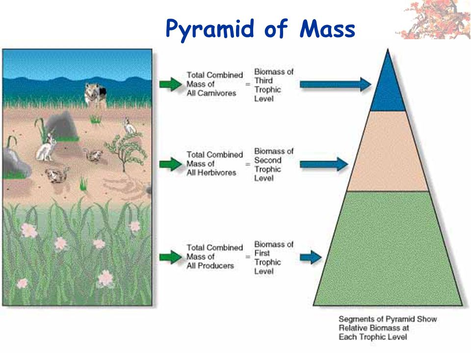 Pyramid of Mass