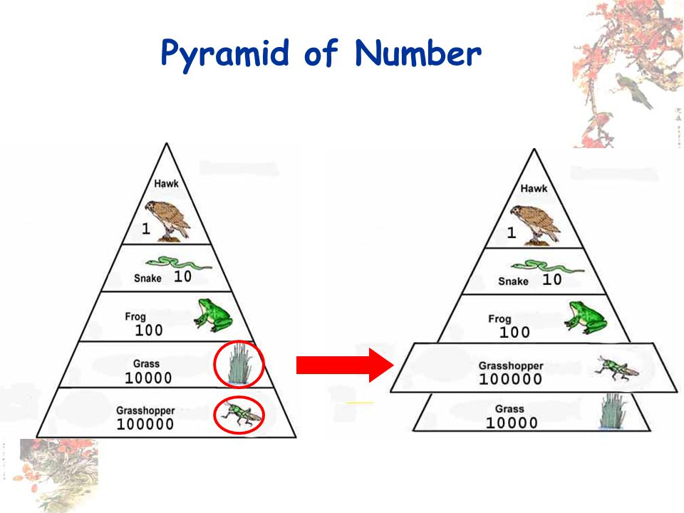 Pyramid of Number