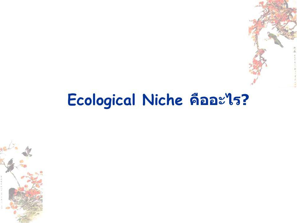 Ecological Niche คืออะไร