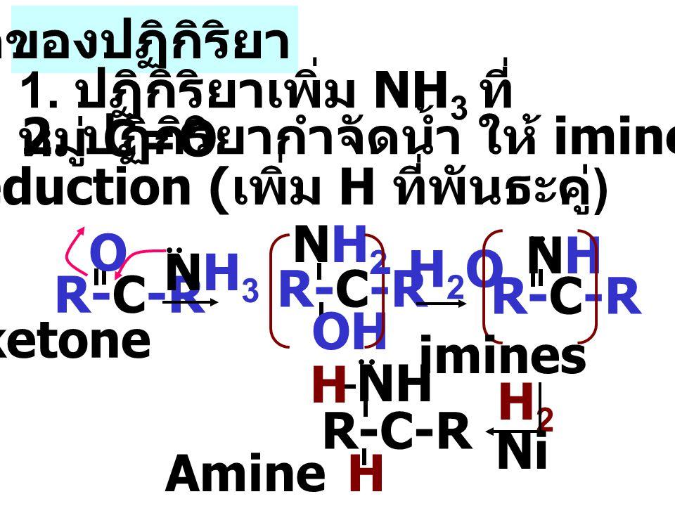 กลไกของปฏิกิริยา 1. ปฏิกิริยาเพิ่ม NH3 ที่หมู่ C=O. 2. ปฏิกิริยากำจัดน้ำ ให้ imines. 3.ปฏิกิริยา reduction (เพิ่ม H ที่พันธะคู่)