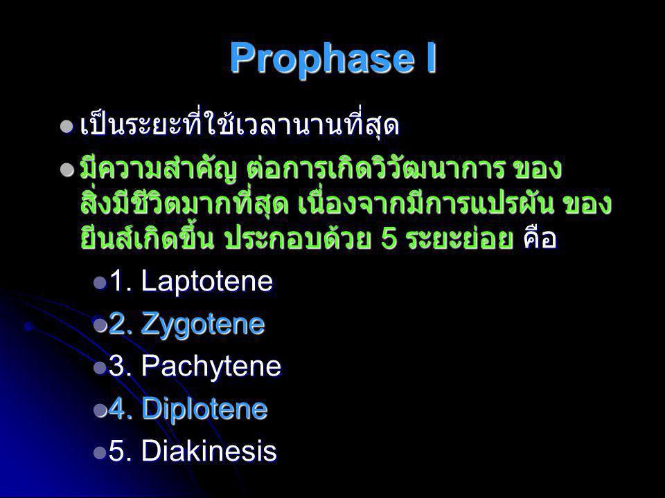 Prophase I เป็นระยะที่ใช้เวลานานที่สุด