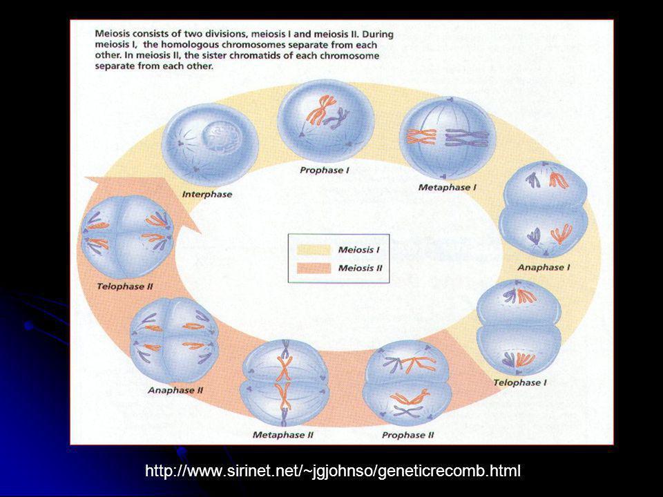 http://www.sirinet.net/~jgjohnso/geneticrecomb.html
