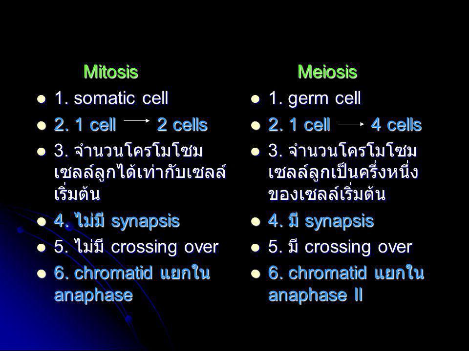 Mitosis 1. somatic cell. 2. 1 cell 2 cells. 3. จำนวนโครโมโซมเซลล์ลูกได้เท่ากับเซลล์เริ่มต้น.
