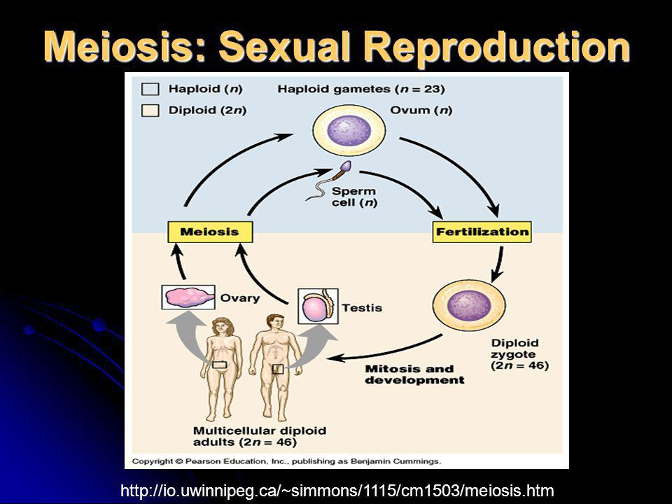 Meiosis: Sexual Reproduction