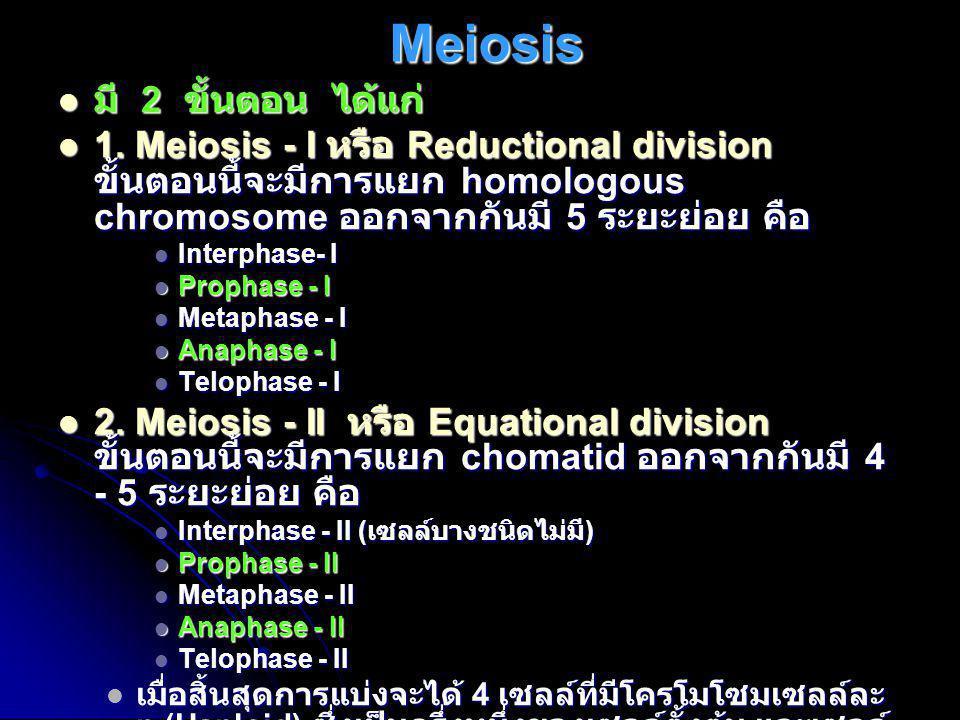 Meiosis มี 2 ขั้นตอน ได้แก่