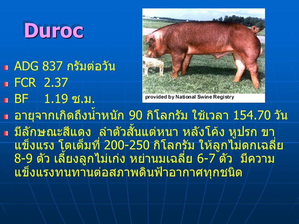 Duroc ADG 837 กรัมต่อวัน FCR 2.37 BF 1.19 ซ.ม.