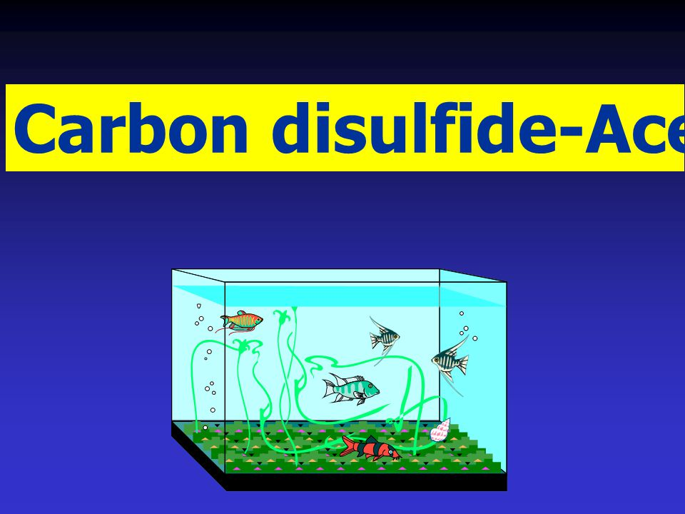 Carbon disulfide-Acetone System: