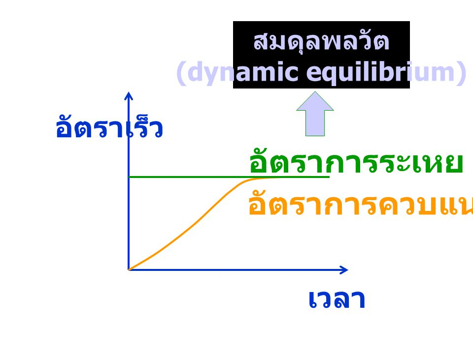 (dynamic equilibrium)