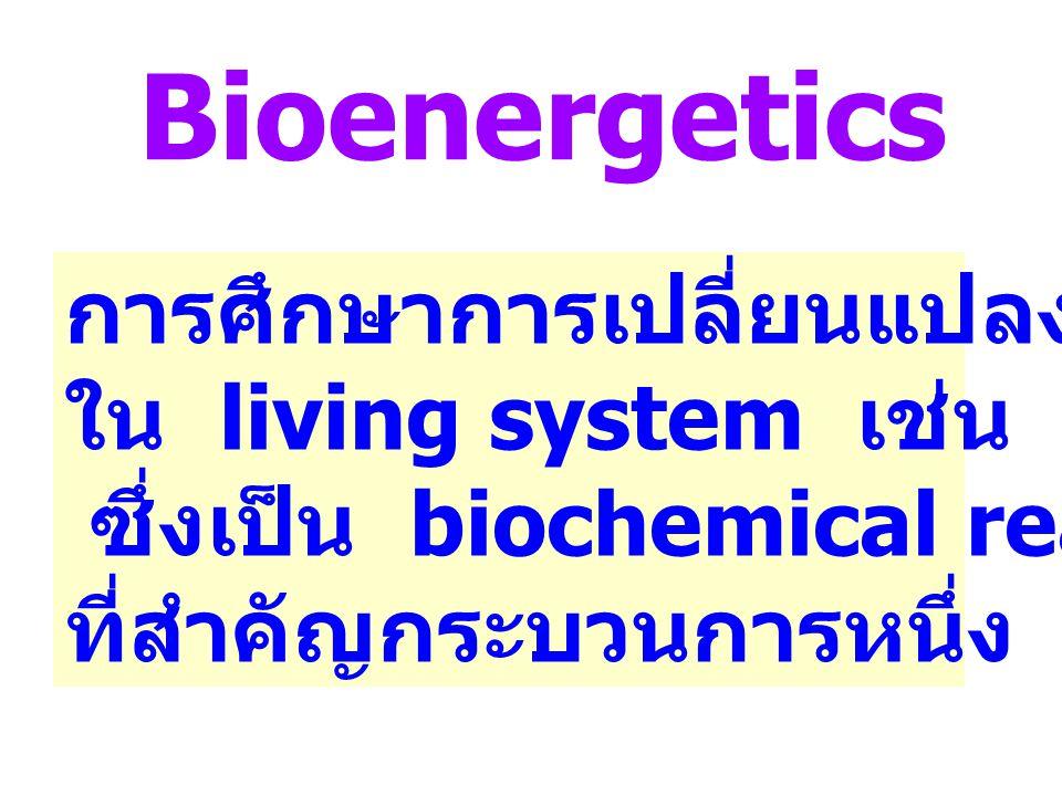 Bioenergetics การศึกษาการเปลี่ยนแปลงพลังงาน