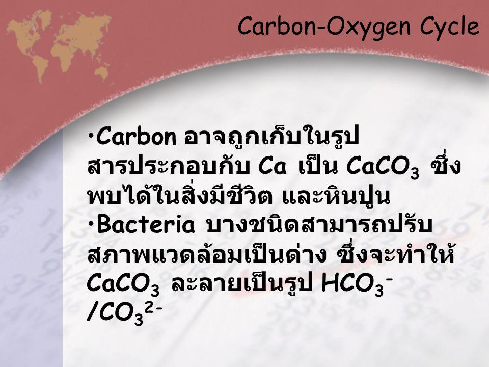 Carbon-Oxygen Cycle Carbon อาจถูกเก็บในรูปสารประกอบกับ Ca เป็น CaCO3 ซึ่งพบได้ในสิ่งมีชีวิต และหินปูน.