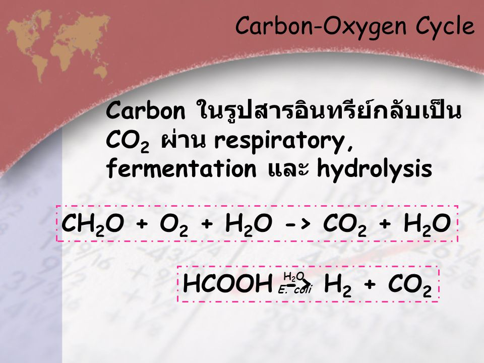 Carbon-Oxygen Cycle Carbon ในรูปสารอินทรีย์กลับเป็น CO2 ผ่าน respiratory, fermentation และ hydrolysis.