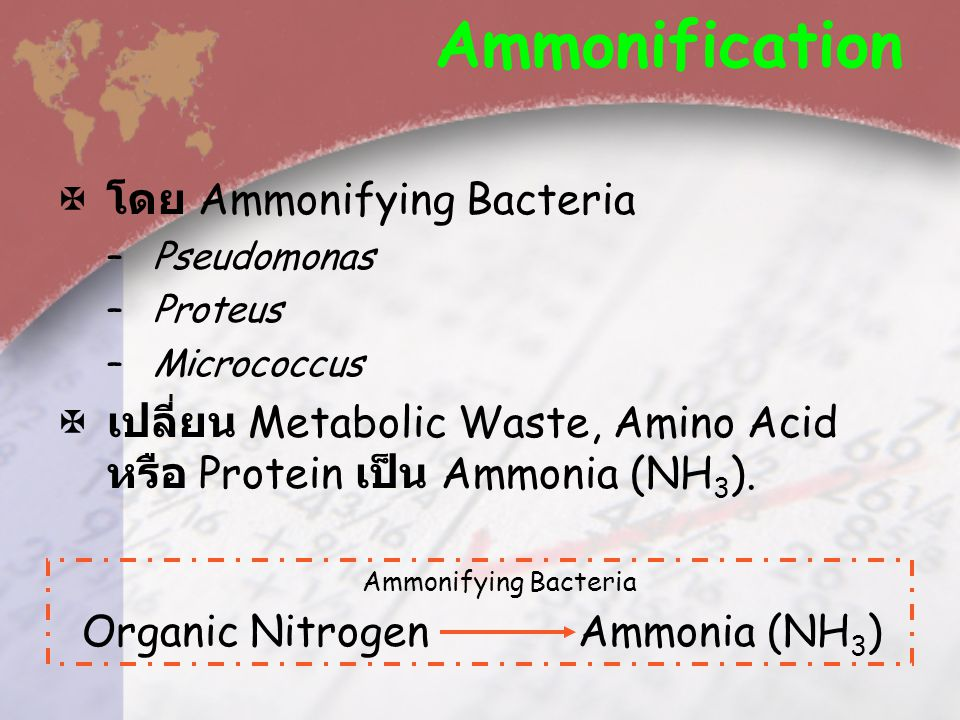 Ammonification โดย Ammonifying Bacteria