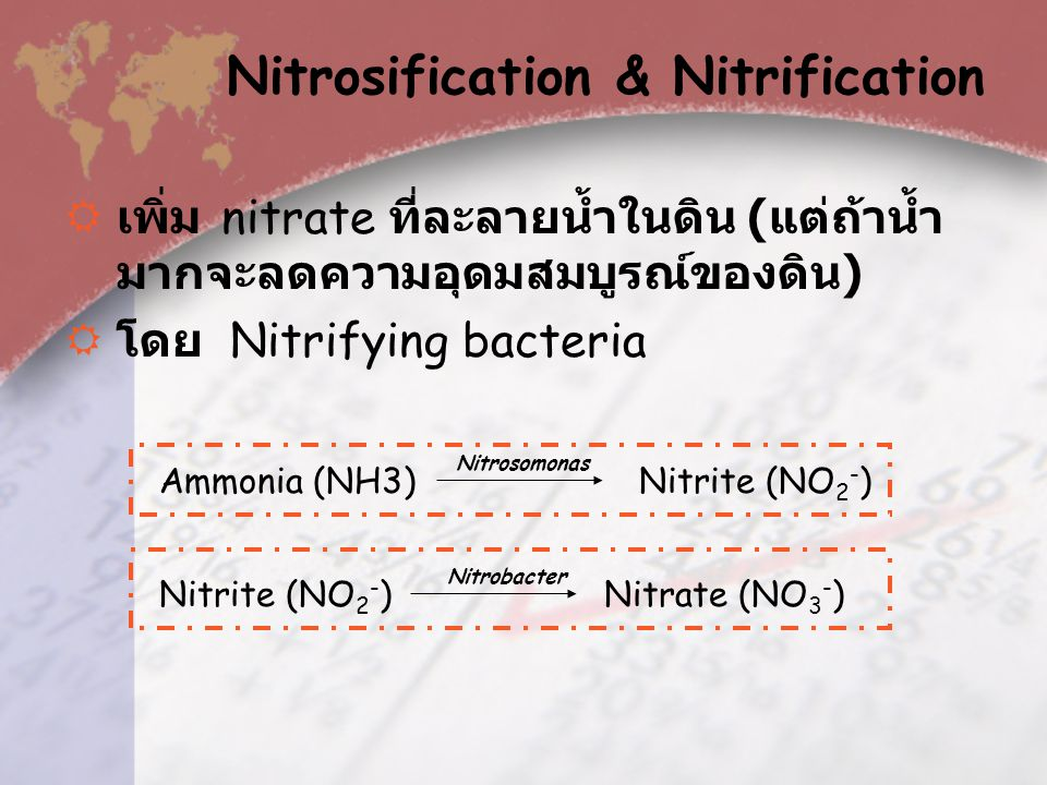 Nitrosification & Nitrification