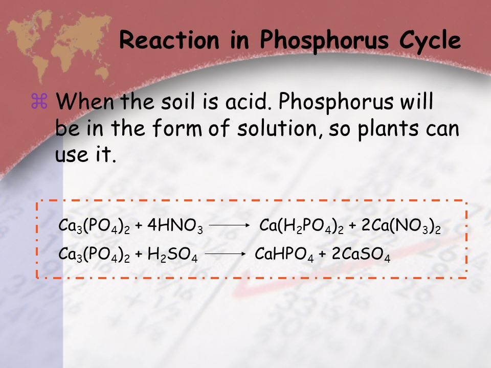 Reaction in Phosphorus Cycle